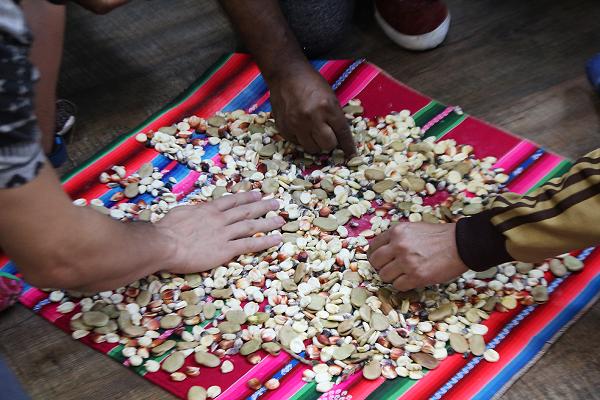 Na América Latina, há inúmeras espécies de milho. Por que só plantamos milho amarelo?, questiona Carolina Velasquez.