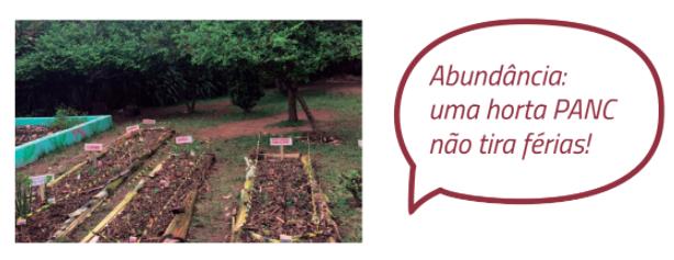 horta em escola pública - alimentação e direito à educação